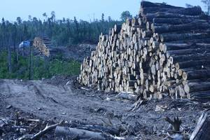 Clearcuts and logs on the Whiskey Jack Forest Management Unit, Ontario