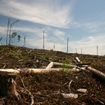 Clearcut on Grassy Narrows Territory