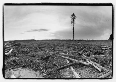 Grassy Narrows Land, Photographer Jon Schledewitz